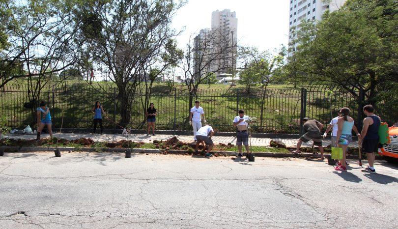 Vamos plantar árvores pelo bairro?