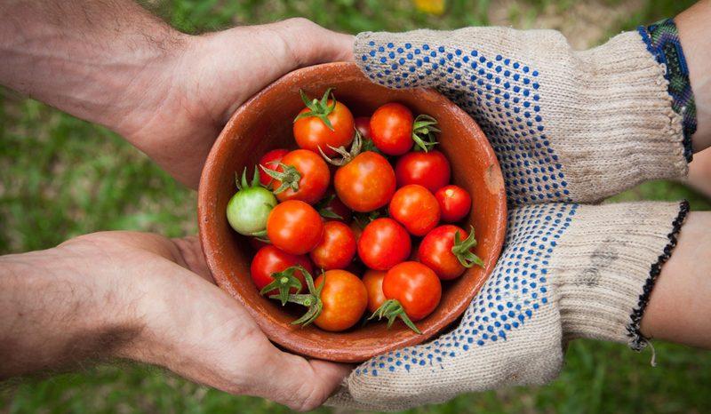 Série Orgânicos: O consumidor e a valorização do produtor