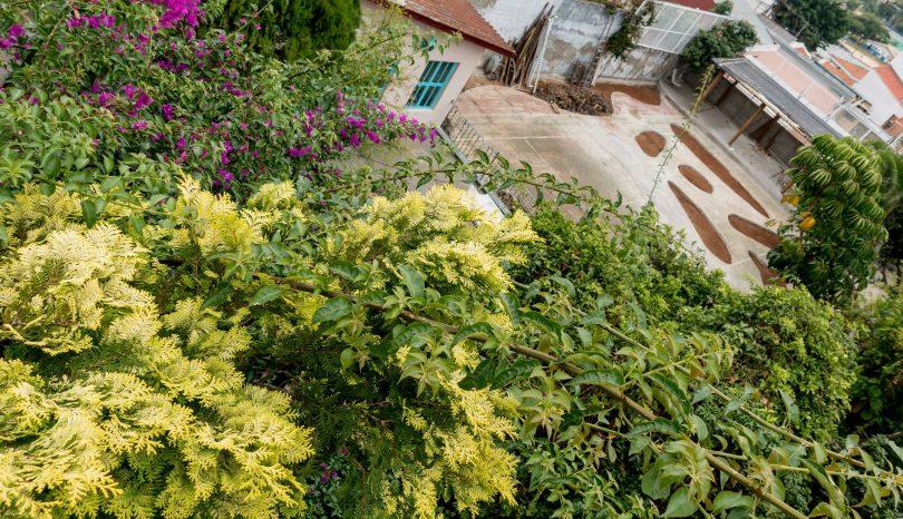 Um quintal verde e sustentável