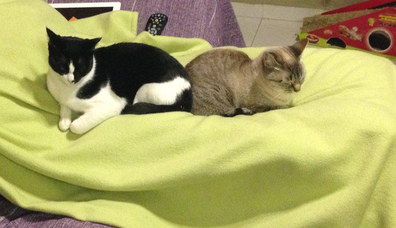 Os gatos não dormem juntos, mas acho que se amam